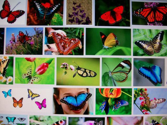 mariposas de google imágenes