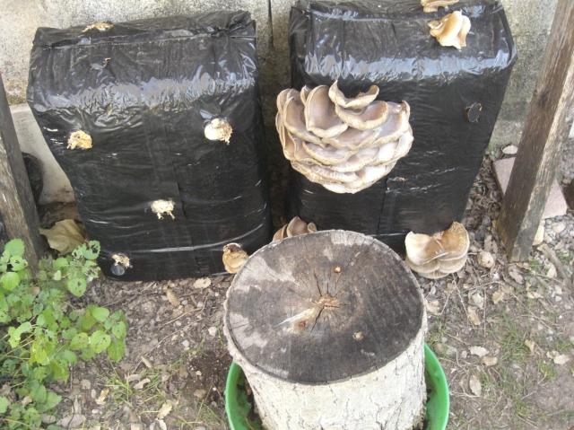 balas de cultivo de setas