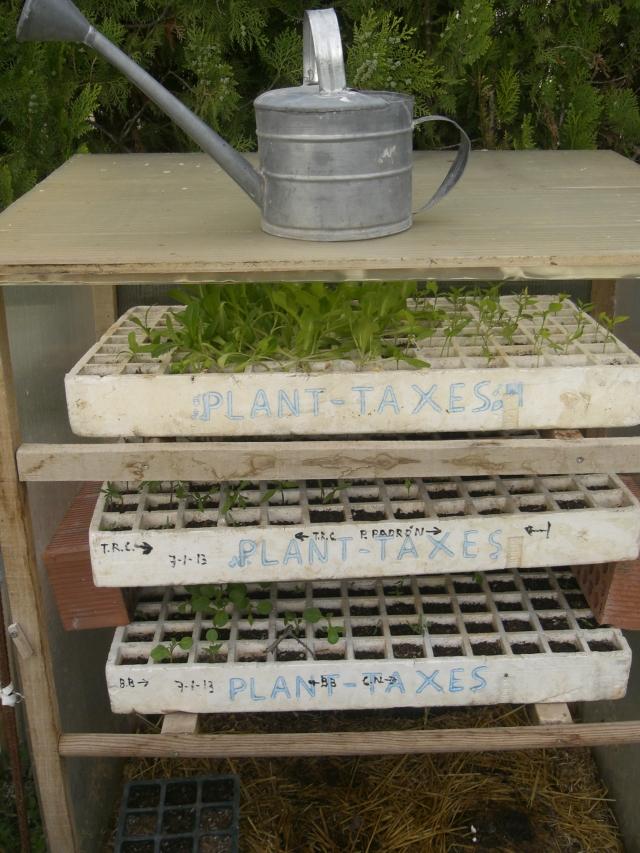 invernadero para plantel