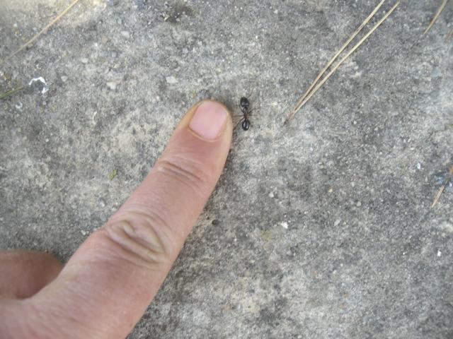 hormiga y dedo