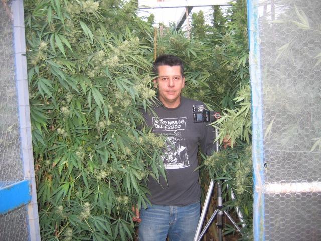 Enrique Fornes Angeles con plantas de marihuana. Yo soy enemigo del Estado
