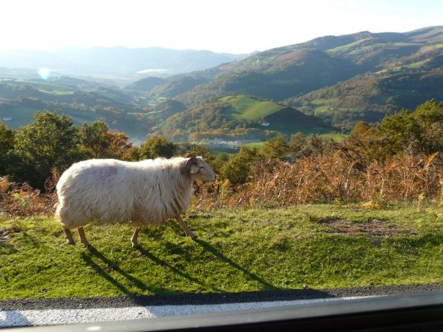oveja en el campo