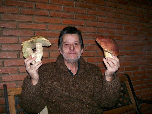 En la mano derecha el boletus edulis (marrón) en la mano izuiqerda el boletus pinícola (rojo)