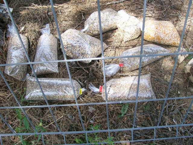 Comida para los pájaros: cañamones, alpiste, semillas mixtas, maiz.