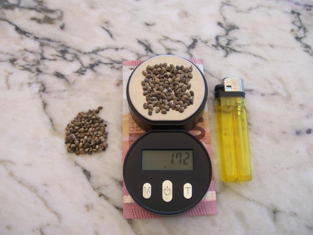 Peso de cien cañamones
